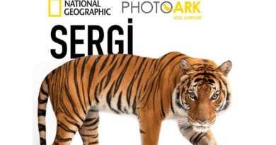 National Geographic Sergisi Photo Ark